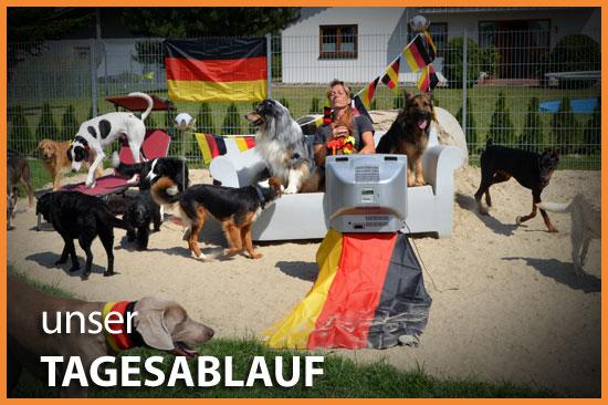 Tagesablauf Dog Lodge Hundehotel Tannheim