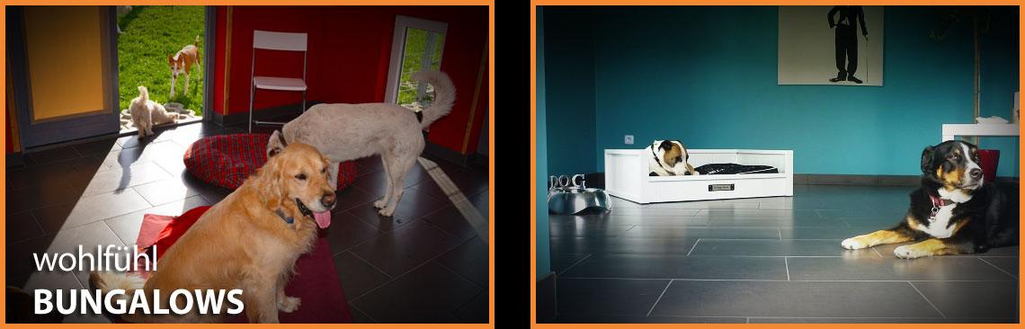 Dog Lodge Hundehotel - Wohlfühl Bungalow