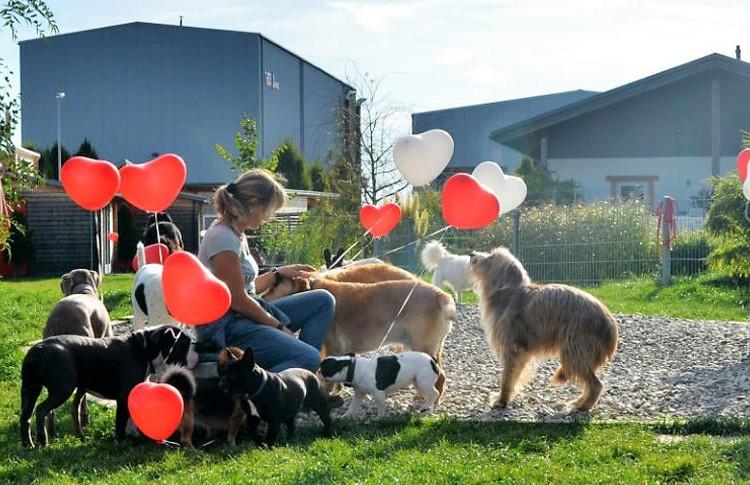 Dog Lodge Hundehotel - Wir feiern